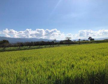熊本のレトロな町人吉より湯前町へ、ローカル鉄道沿線を行くお手軽散策プラン