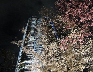 【仕事終わりからでもいける!】首都圏都内の夜桜デートスポットまとめ