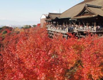 紅葉の京都・清水寺へ!伊右衛門カフェと新島旧邸を観光した後は大阪へ移動。