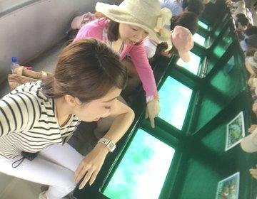 生きてるサンゴを潜らず見られる!川平湾のグラスボートとかき氷!