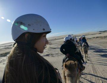 世界一野生イルカに遭遇しやすいと言われる一つ!シドニーネルソンベイで最大砂丘アクティビティ体験