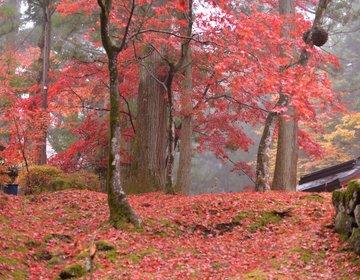 自然溢れる栃木県!紅葉シーズン終わりかけの日光はこうだった!2014年調べ。