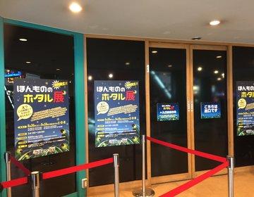 みなとみらいでホタルが見れる!横浜コスモワールドで開催中のホタル展へ