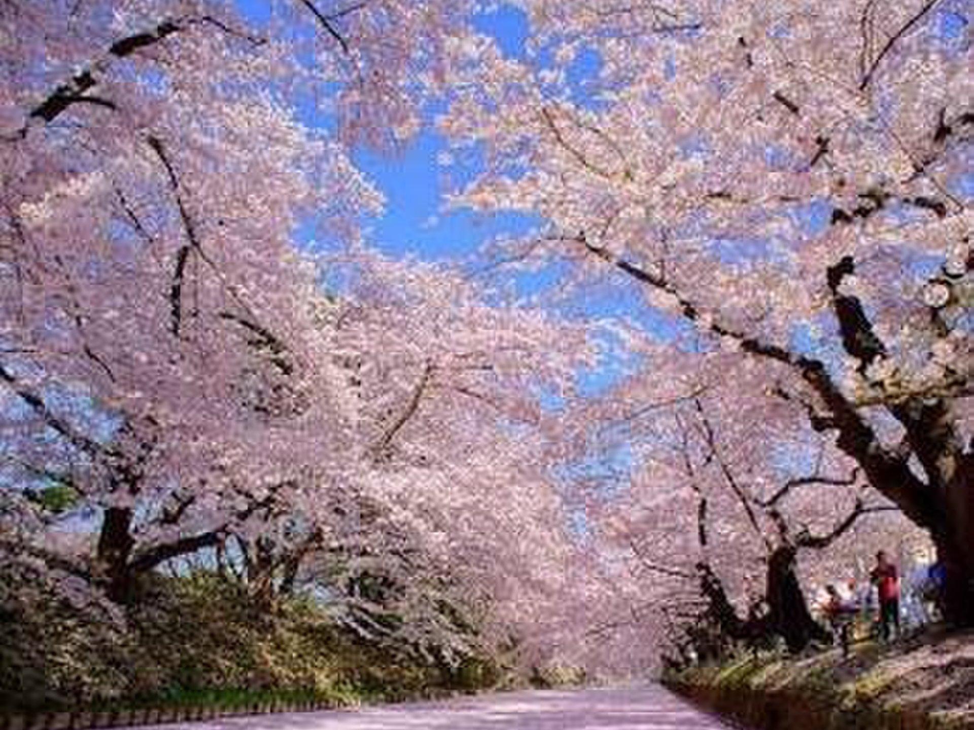 春の名所旅行!青森県の観光におすすめのスポット10選