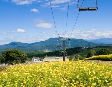 長野県・野尻湖 花畑を空中散歩して、ナウマンゾウを見て、カヌー!【かじか亭、ラ・プーサン、本多】