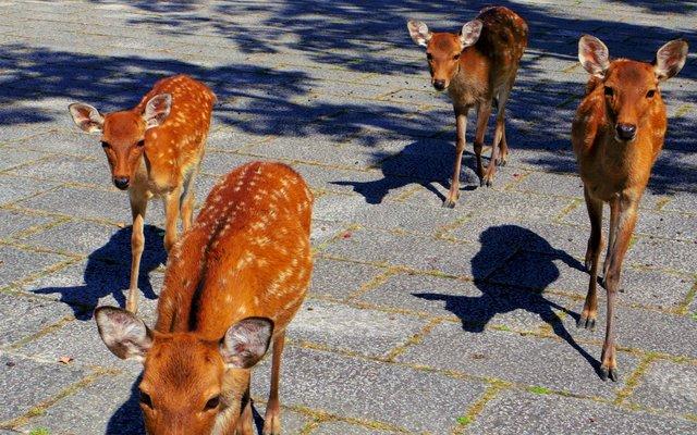 奈良公園 (Nara Park)