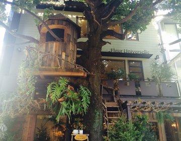 【広尾・ディア・シスターのロケ地】ツリーハウスのある人気カフェ・レグランザンブルでランチ♡