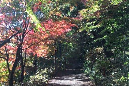 高尾山ハイキングコース