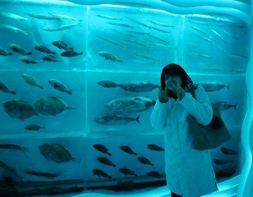 おもしろ博物館好きに!シャークミュージアムと氷の博物館が【宮城県・気仙沼】の海の市にあるよ♪