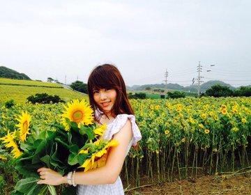 【おすすめ知多半島ドライブコース】夏の太陽!ひまわり!海!感動間違いなしの名古屋の南を旅しよう!