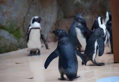 アドベンチャーワールド ペンギン王国