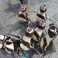 長崎ペンギン水族館 (Nagasaki Penguin Aquarium)