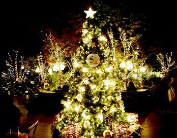 一風変わったお店はどう?「表参道のクリスマスデートプラン」表参道のおすすめグルメやイルミネーション