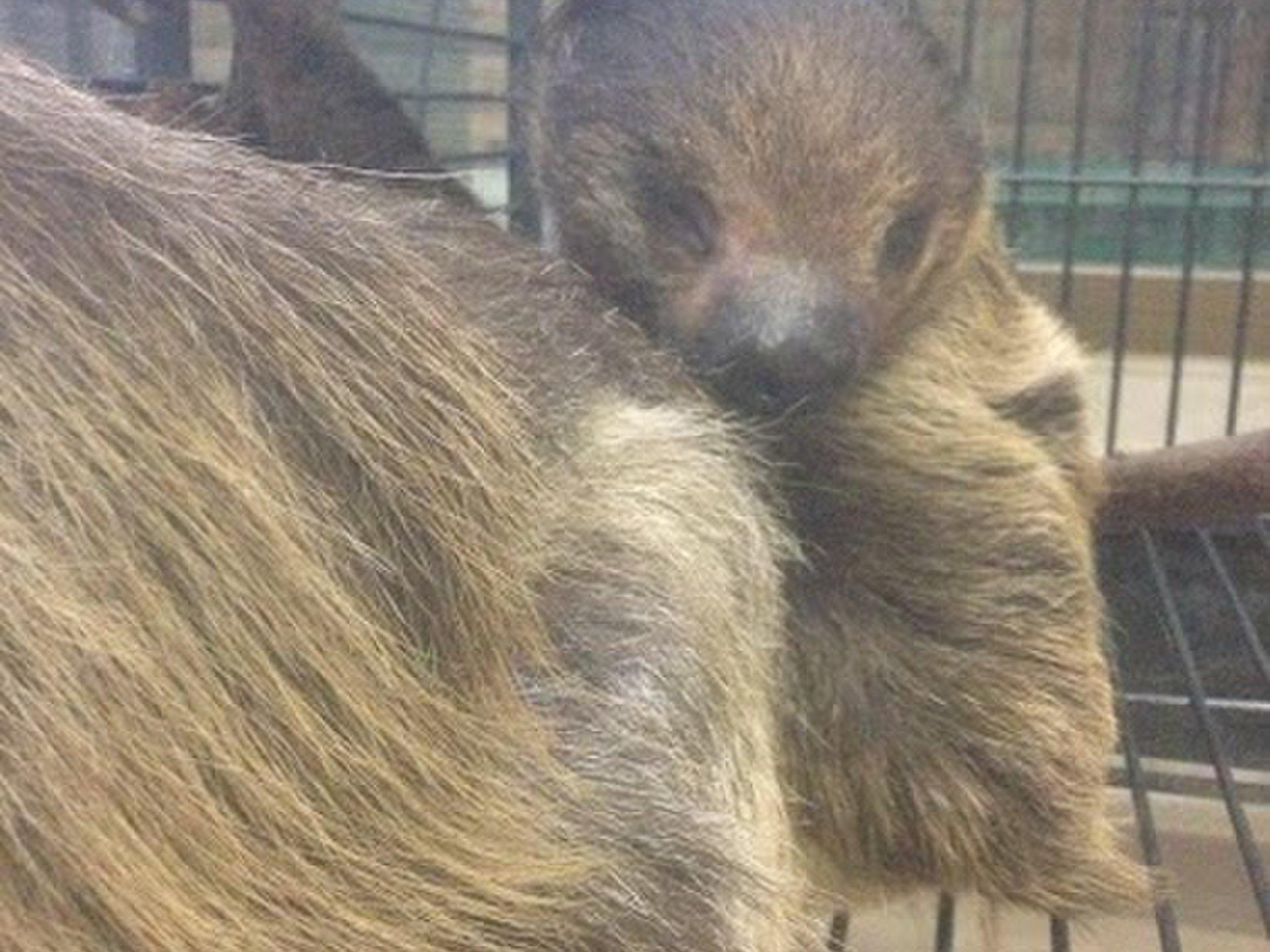 横浜ベイサイドマリーナの変わったデートスポット!見て触って買える動物園「ノア」ナマケモノにペンギン?