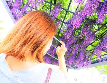 「桜が散っても花見ができるって知ってた?」梅田から3分!今がベストシーズンの野田藤を見に行こう!