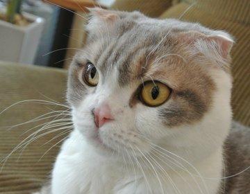 【京都・西院】猫カフェじゃないけど看板にゃんこがいるカフェ2選!カメラ女子必見です!