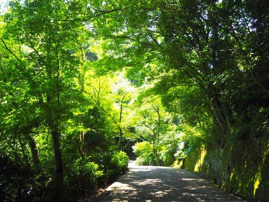 足羽山公園下駐車場