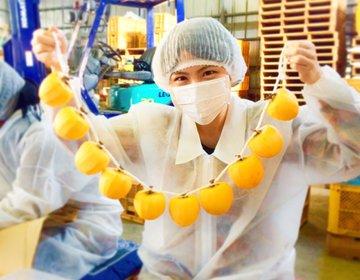 福島県国見町で「あんぽ柿加工体験」最高級な蜂屋柿であんぽ柿を作る♡