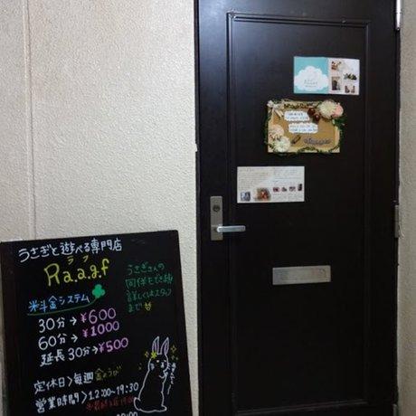 うさぎと遊べる専門店Ra.a.g.f 原宿店