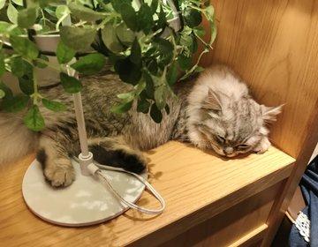 猫の隣でノマドワーク⁉︎猫カフェMoCHA新宿店に行こう!