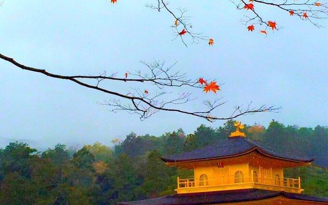 北山 鹿苑寺 (金閣寺) (Kinkaku-Ji Temple)