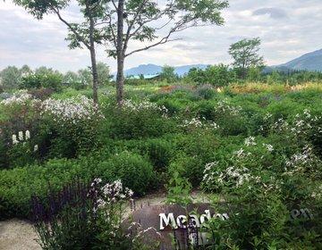 【清水町】世界一美しい庭に輝いた「十勝千年の森」で癒される♡カフェテラスで優雅なティータイムを♪