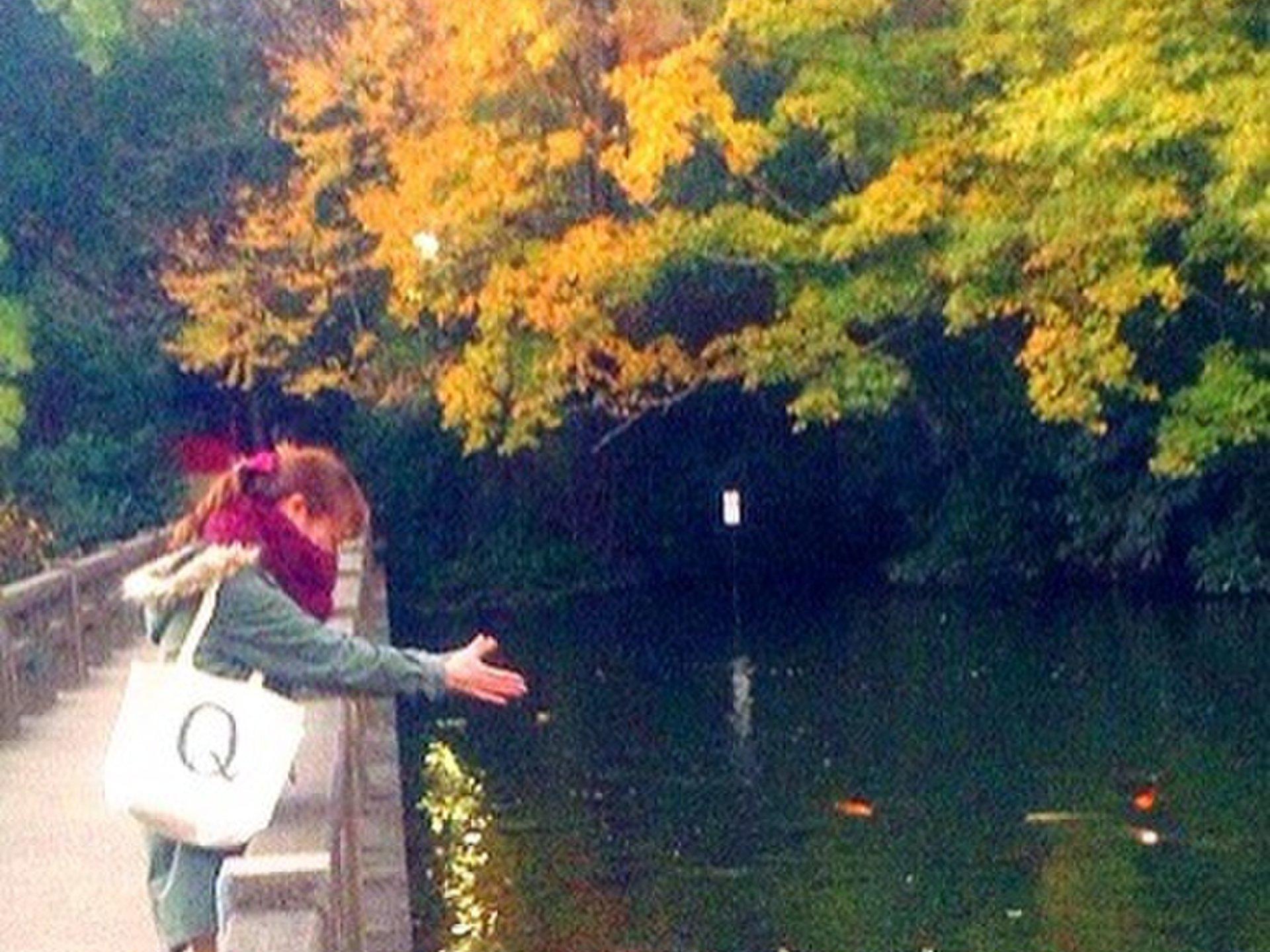 【井の頭公園でお散歩&ピクニック♪】紅葉も見れるおすすめデートプラン!