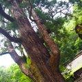 若狭姫神社(若狭彦神社下社)