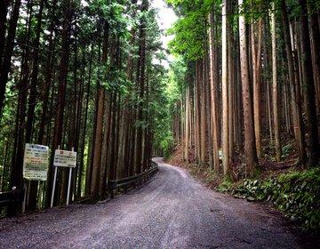 【奥多摩ドライブ】奥多摩湖から白糸の滝、そして名物釜飯を食す観光プラン!