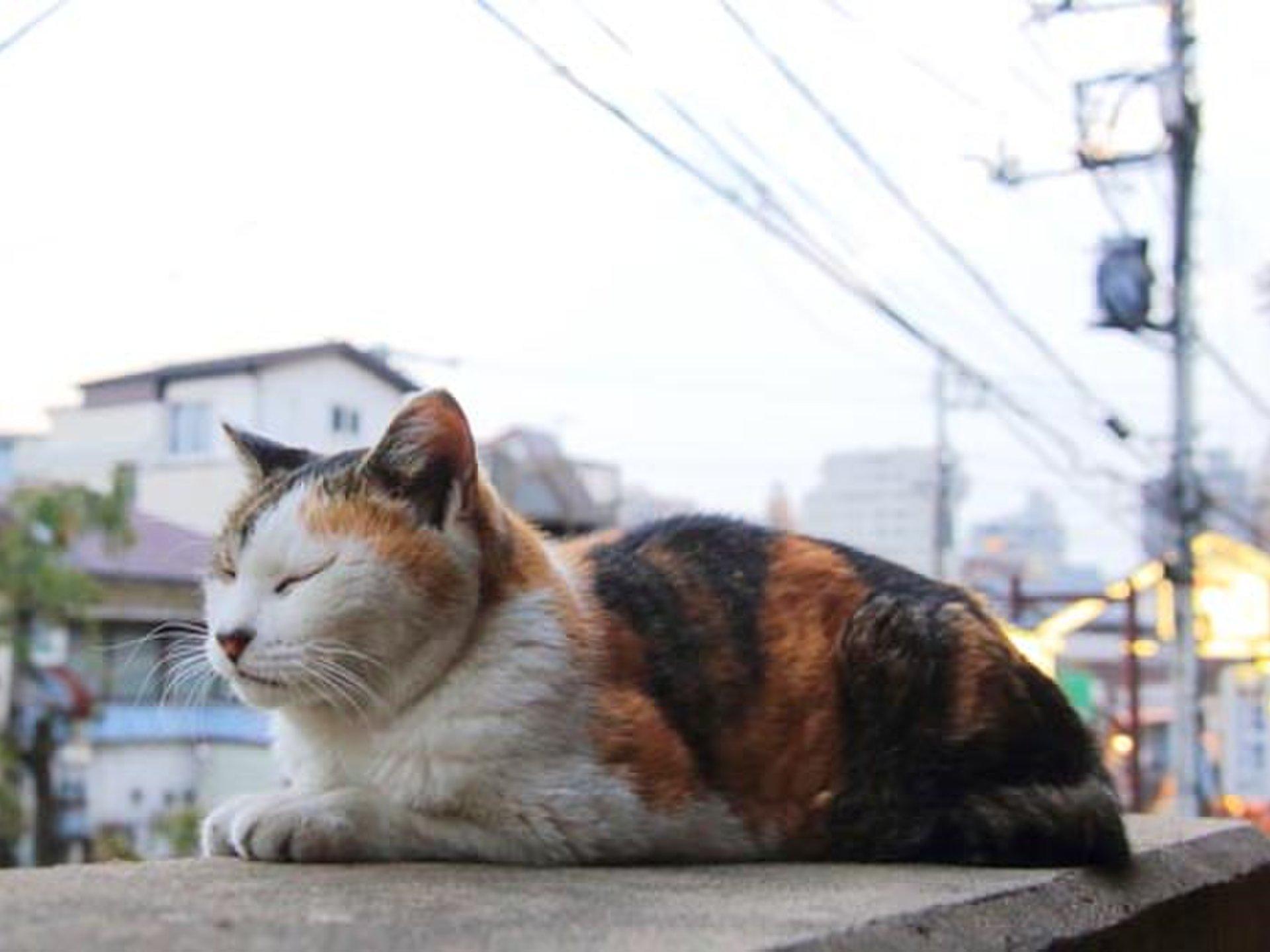 谷中銀座 猫の街をお散歩&グルメする、ほっこりデート!【フロランタン専門、イナムラショウゾウ】