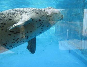 【新潟】水族館・マリンピア日本海×日本海と西海岸公園をお散歩。おすすめデートコース