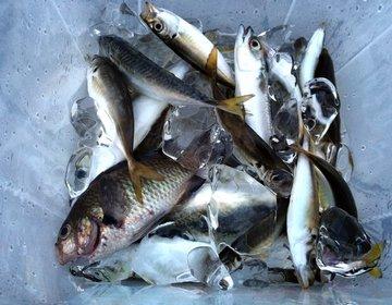【釣り情報】関西の穴場釣りスポット!神戸空港から徒歩5分の防波堤で海釣りを楽しむ!