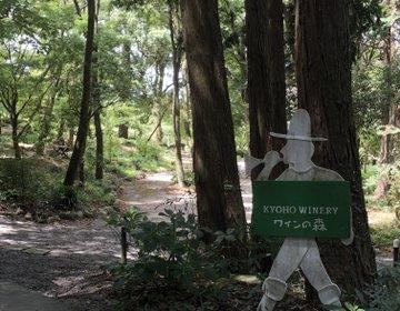 ぶどうの産地で有名な田主丸の巨峰ワイナリー、森の中で癒されデートにももってこい♪