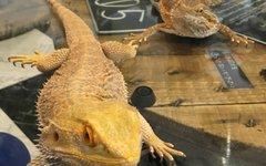 爬虫類カフェ ロックスター