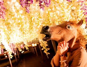 馬でも映える!?大井競馬場イルミネーション「東京メガイルミ」の周り方を完全レポするうま!
