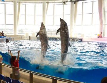 茨城の最高な水族館❤︎水戸・大洗・水族館・ おすすめ