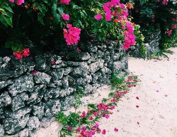 ゆったりのんびり最高の島時間 【竹富島】