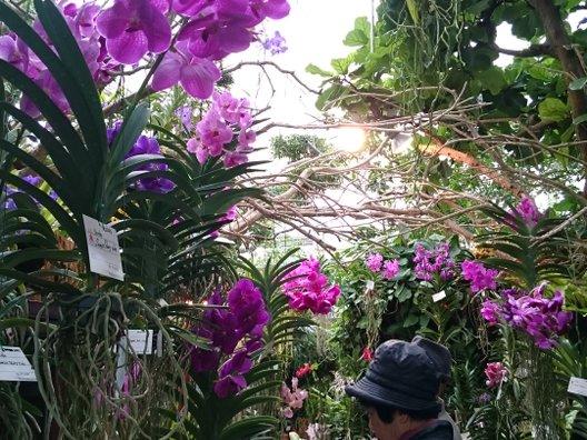 海洋博公園 熱帯ドリームセンター