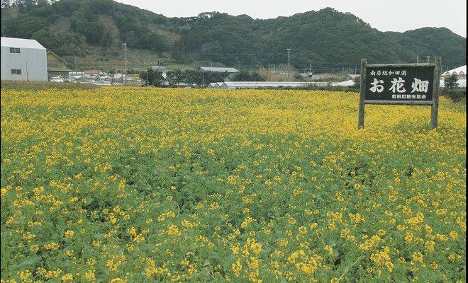 和田の花畑
