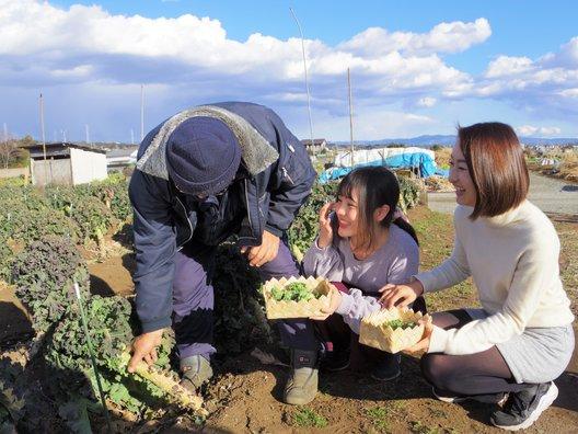 プチヴェール(深澤さんの農家)