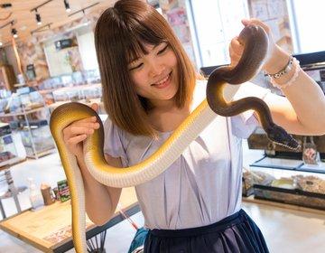 大阪アメリカ村「スネークカフェ」で時間無制限のヘビ触れ合い&ゲテモノ料理に挑戦!