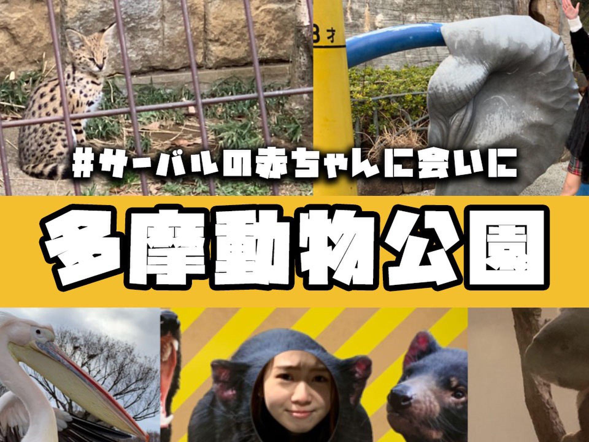 動物園での癒され休日がおすすめ♡激かわ!サーバルの赤ちゃんを「多摩動物公園」へ見に行こう♪
