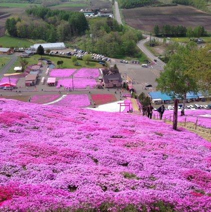 東藻琴芝桜公園キャンプ場