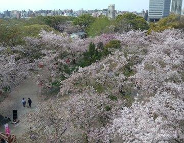 お花見は、昼も夜も福岡城さくらまつりへ☆
