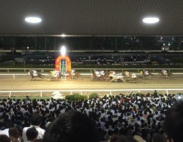 【競馬場デート】馬が目の前に!!!競馬レースのナイター観戦で盛り上がっちゃおう♫