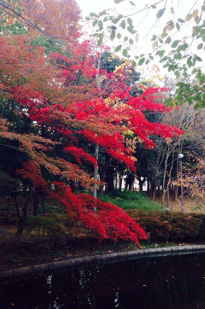 蚕糸の森公園