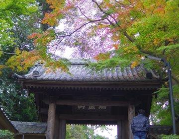 【鎌倉さんぽ】秋の絶景は鎌倉にアリ!格式あるお寺「円覚寺」は紅葉の名所だった!