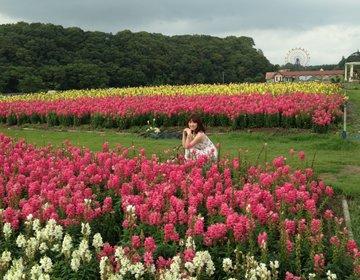 【関東で自然いっぱいのおすすめ日帰り穴場デートスポット「東京ドイツ村」】お花畑と動物と芝滑りの公園