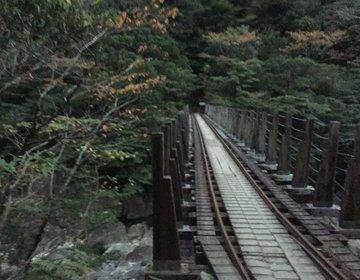【屋久島×縄文杉】死ぬまでに一度は見たい!圧巻の縄文杉は日本屈指のパワースポット!