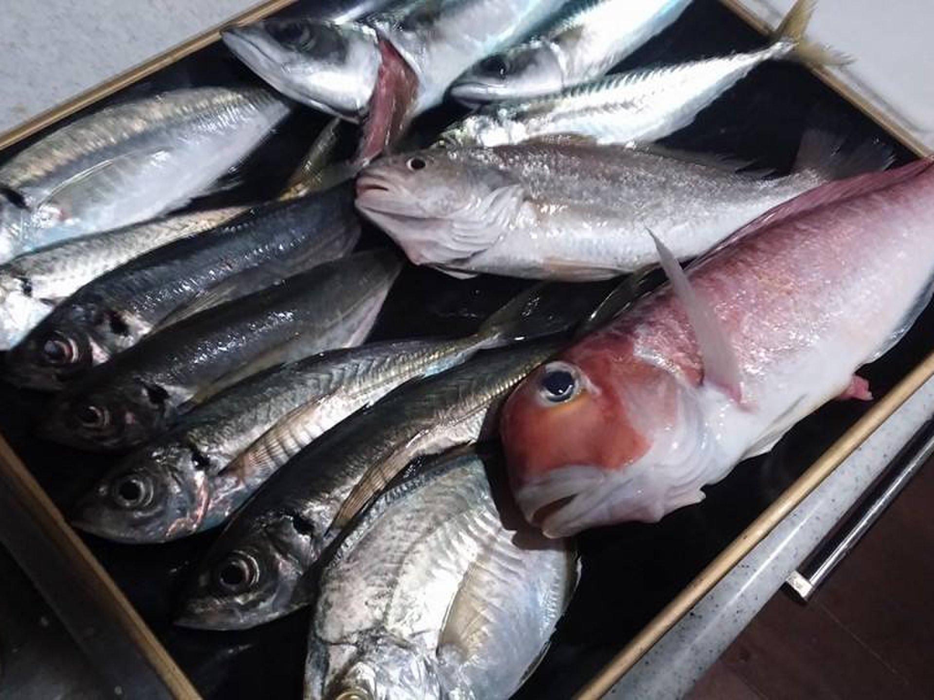 【天然高級魚でホームパーティ】金沢八景・忠彦丸の「沖のライトウィリー五目」という船釣りが密かにアツい